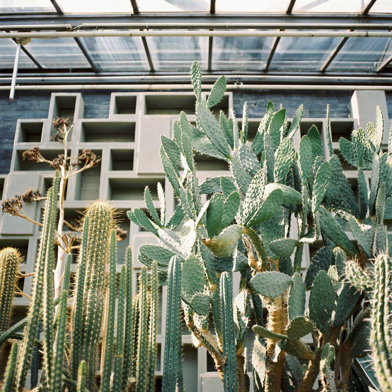 Hamburg Botanic Garden 1